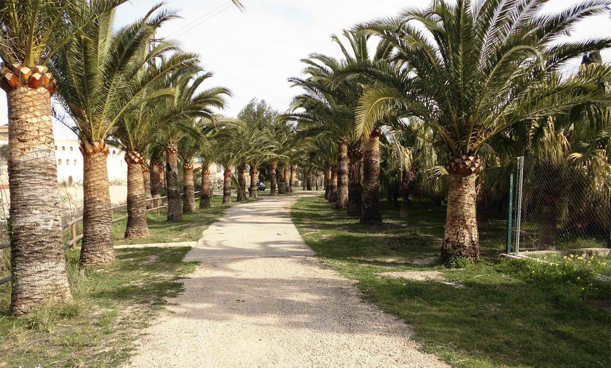 Senda amb palmeres a la vora dreta del riu Serpis.