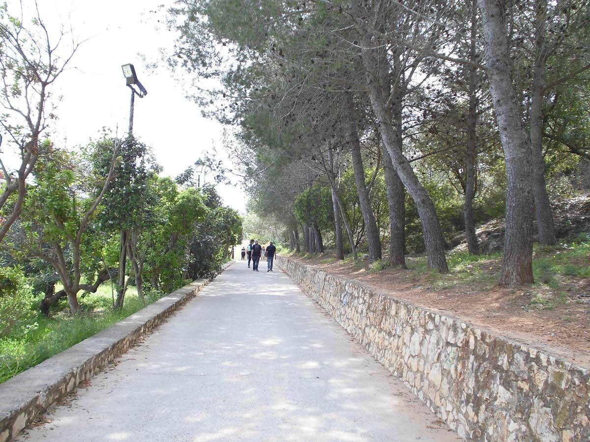 paseo entre pinos